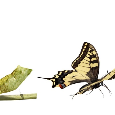 Image From a caterpillar to a butterfly